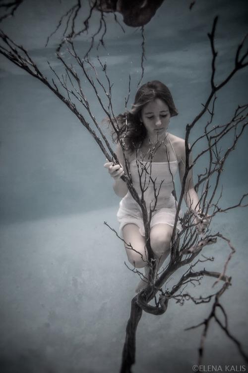 Bird3 de Elena Kalis