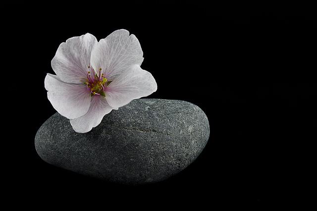 KellarW , Cherry Blossom Stone, |CC BY 2.0