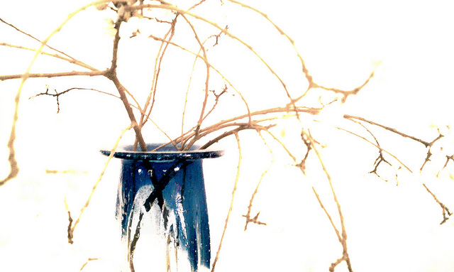 Branches in blue par Keoni Cabral sur CC ! BY ! 2.0