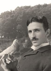 Tesla et ses amis, les pigeon de Central Park.