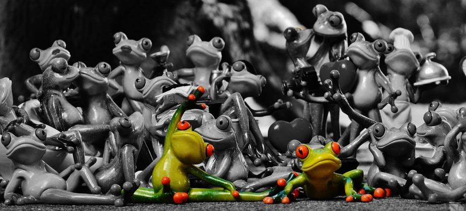Dans une situation sociale, comment vous comportez-vous? Quel type de «grenouille» êtes-vous?