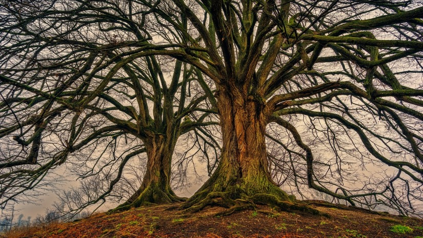 tree-3097419_1280.jpg