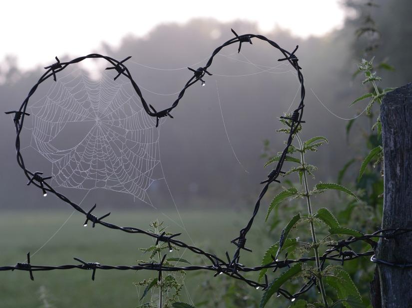 cobweb-1949778_1280.jpg