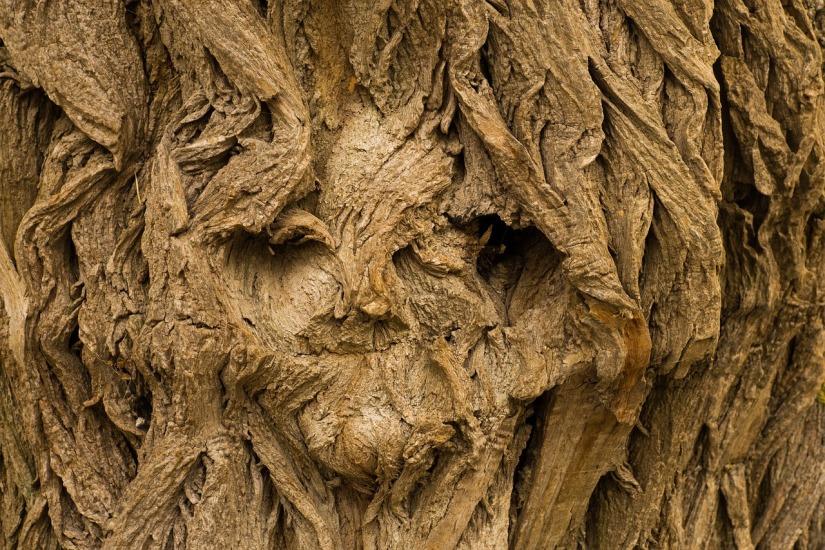 tree-2127699_1280